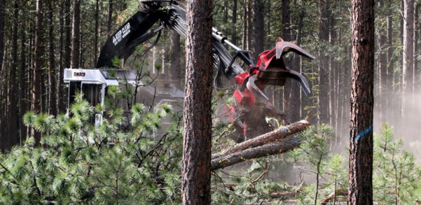 Gallring och röjning av skog