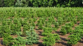 Vi utför plantering av skog