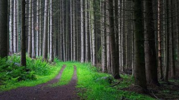 Rönås Skog erbjuder alla tjänster inom skogsbruk