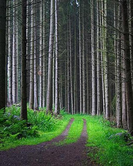 Rönås Skog AB, ett komplett skogsbolag i Kyrkhult